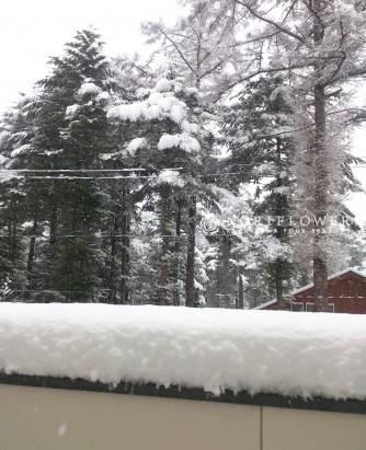 軽井沢4月末 春の突然の大雪
