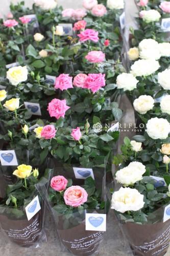 卒園式花ギフト、卒業式花ギフト、ホワイトデー、お祝いギフト、バラのギフト、軽井沢花屋、軽井沢フラワーショップ